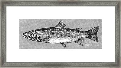 Trout Framed Print by Granger