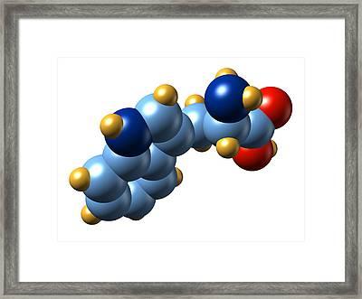 Tryptophan, Molecular Model Framed Print