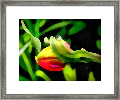 Tulip And Drop Framed Print by Odon Czintos