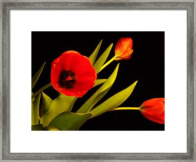 Framed Print featuring the photograph Tulip Arrangement 2 by Peter Mooyman