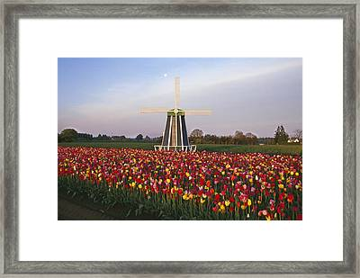 Tulip Field And Windmill Framed Print by Natural Selection Craig Tuttle