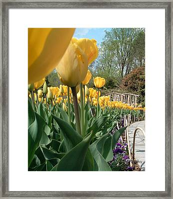 Tulips On Parade Framed Print