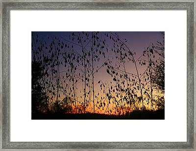 Twilight II Framed Print by Monika A Leon
