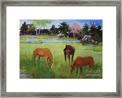 Two Chestnut One Bay Framed Print