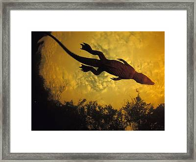 Underthecroc Framed Print