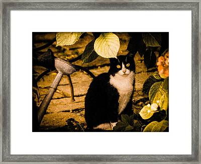 Venice, Italy - Venetian Cat Framed Print