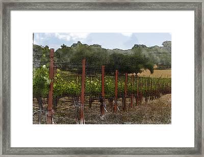 Vineyard In Summer Framed Print