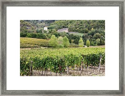 Vineyard Framed Print by Jeremy Woodhouse