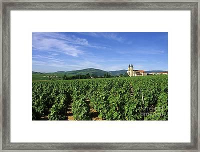 Vineyard. Regnie-durette. Beaujolais Wine Growing Area. Departement Rhone. Region Rhone-alpes. Franc Framed Print by Bernard Jaubert