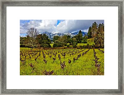 Vineyards And Mt St. Helena Framed Print by Garry Gay