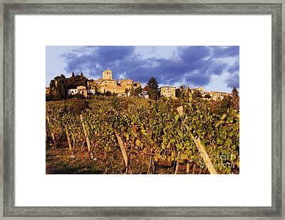 Vineyards Framed Print by Jeremy Woodhouse