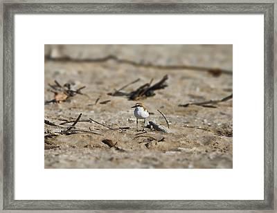 Wading Bird Framed Print by Douglas Barnard