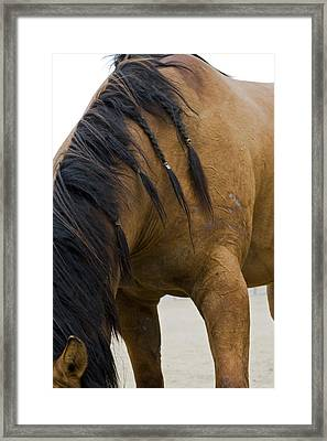 Framed Print featuring the photograph War Horse by Lorraine Devon Wilke