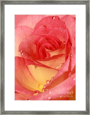 Wet Rose Framed Print by Sabrina L Ryan