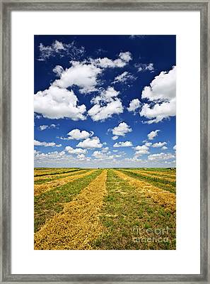 Wheat Farm Field At Harvest In Saskatchewan Framed Print by Elena Elisseeva