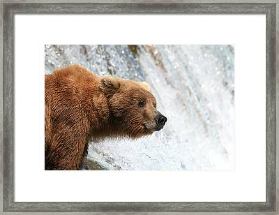 Wheres The Fish. Framed Print by Tracey Hunnewell