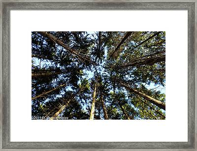 Framed Print featuring the photograph Whispering Pines by Rachel Cohen