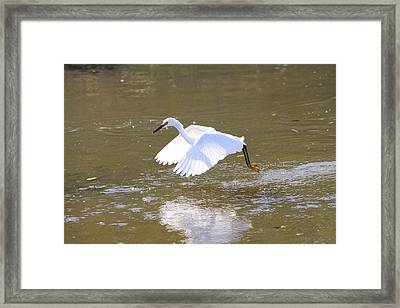 Framed Print featuring the photograph White Egret by Jeanne Andrews