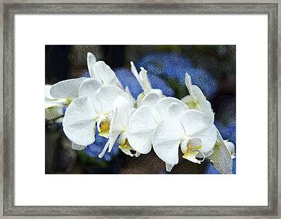 White Orchids Framed Print by Gordon Ripley