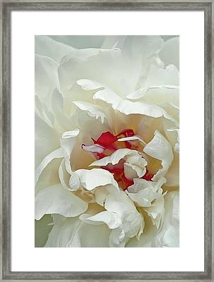 White Peony Framed Print by Gordon Ripley