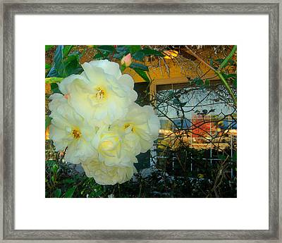White Rose And The Reflection Framed Print by David  Brown