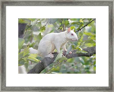 White Squirrel Framed Print by Robert E Alter Reflections of Infinity