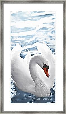 White Swan On Water Framed Print