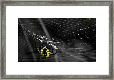 Wicked Web Framed Print by Brian Stevens