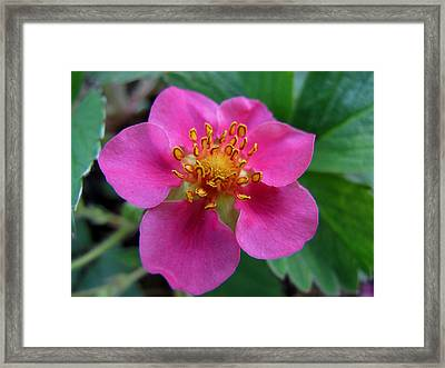 Wild Beauty Framed Print by Valia Bradshaw