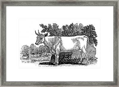 Wild Cattle Framed Print