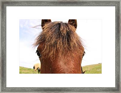 Framed Print featuring the photograph Wild Mustang by Kate Purdy