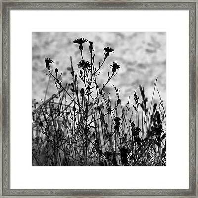 Wildflowers Framed Print by Blink Images