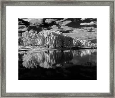 Willow Trees Framed Print by Bob Nardi