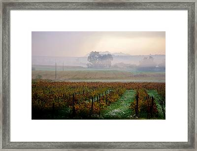 Framed Print featuring the photograph Wine Field by Werner Lehmann