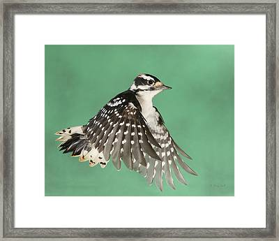 Framed Print featuring the photograph Wing Flaps Down by Gerry Sibell