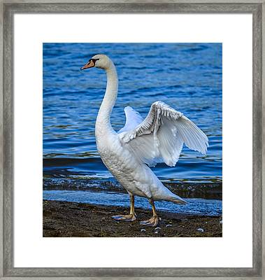 Wings And Waves Framed Print by Brian Stevens