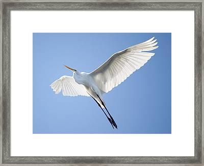 Wings Framed Print by Paulette Thomas