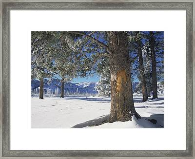 Winter In Yellowstone National Park Framed Print by Tim Fitzharris