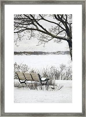 Winter Scene With With Bench And Tree Framed Print by Sandra Cunningham