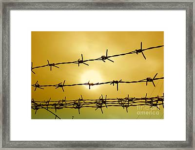 Wire Fence Framed Print by Antoni Halim