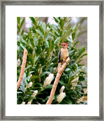 Framed Print featuring the photograph Woody Would He..... by Tanya Tanski