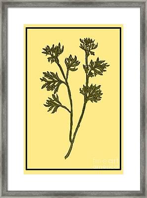 Wormwood, Alchemy Plant Framed Print by Science Source