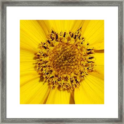 Yellow Flower Detail Framed Print