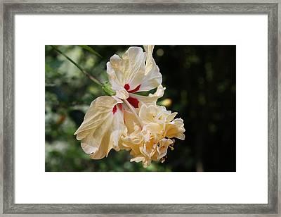 Yellow Hibiscus Framed Print by Natalija Wortman