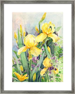 Yellow Iris Framed Print by Nancy Watson