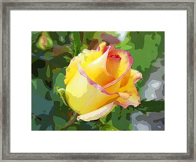 Yellow Rose Framed Print by Anne Mott