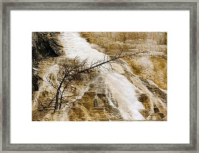 Framed Print featuring the photograph Yellowstone Color by J L Woody Wooden