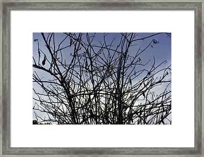 Yet To Spring Framed Print by Sumit Mehndiratta