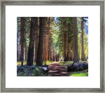 Yosemite Trail Framed Print by Stephen Campbell
