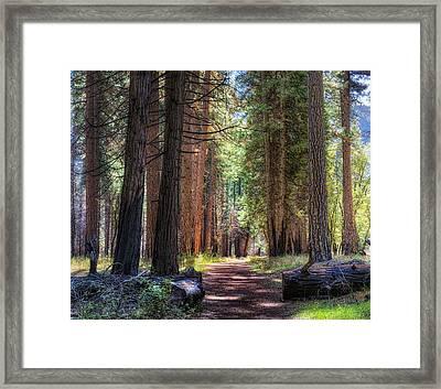 Yosemite Trail Framed Print